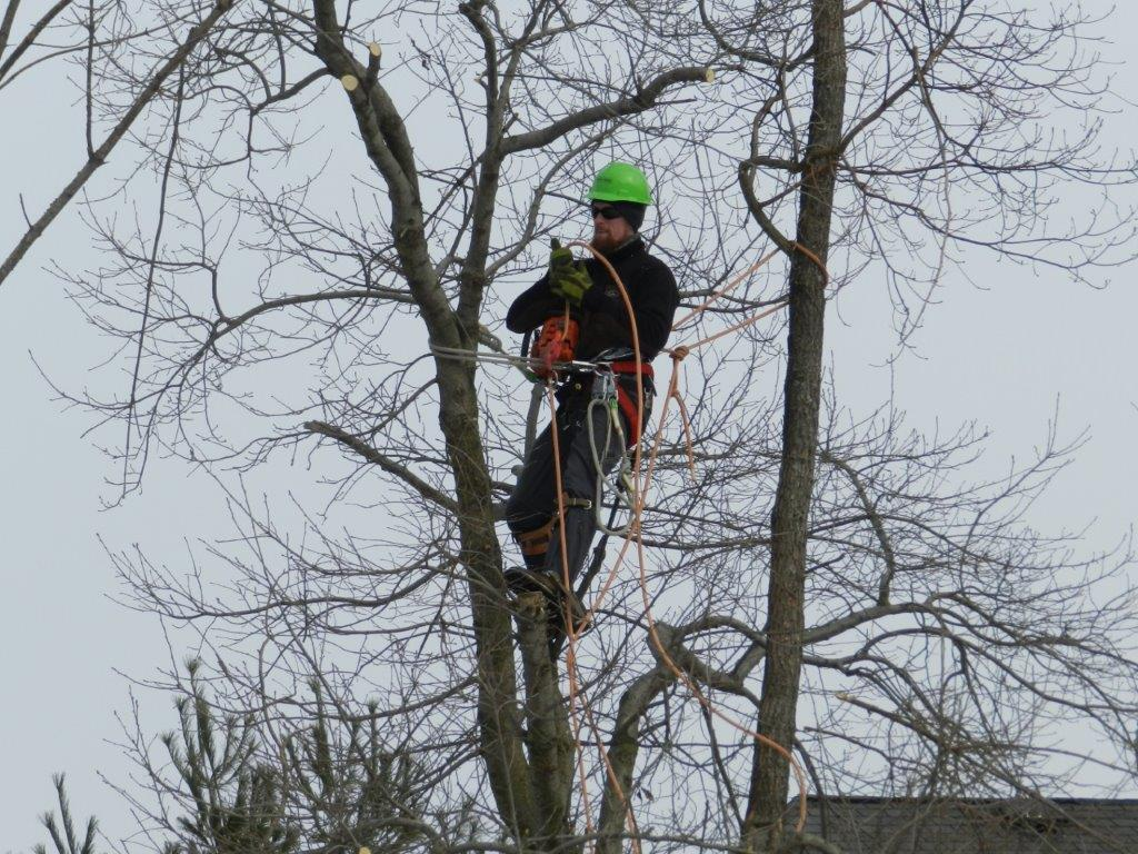 Ibew Local 1919 Tree Trimmers Member Work Photos